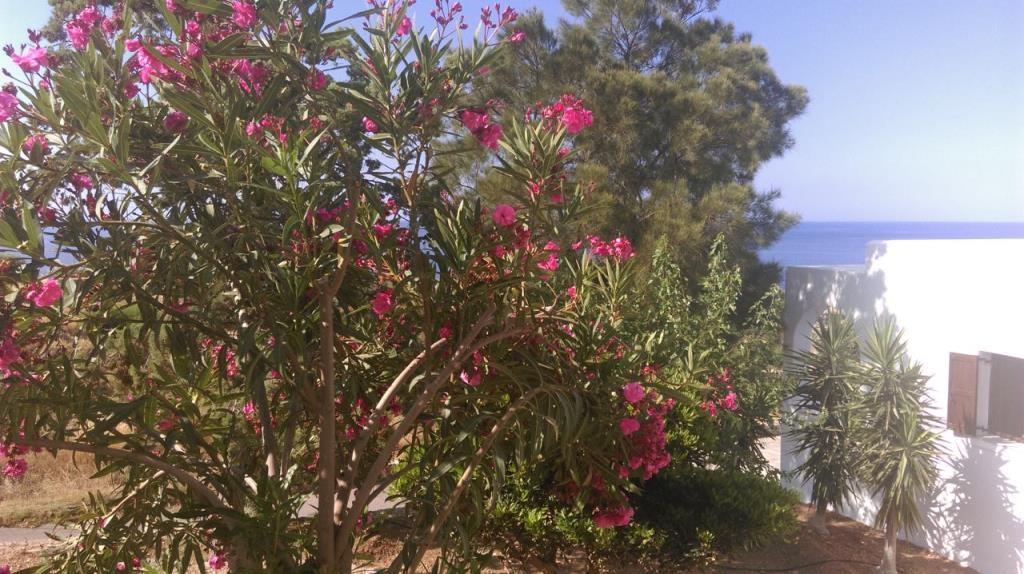 Vritomartis Flowers